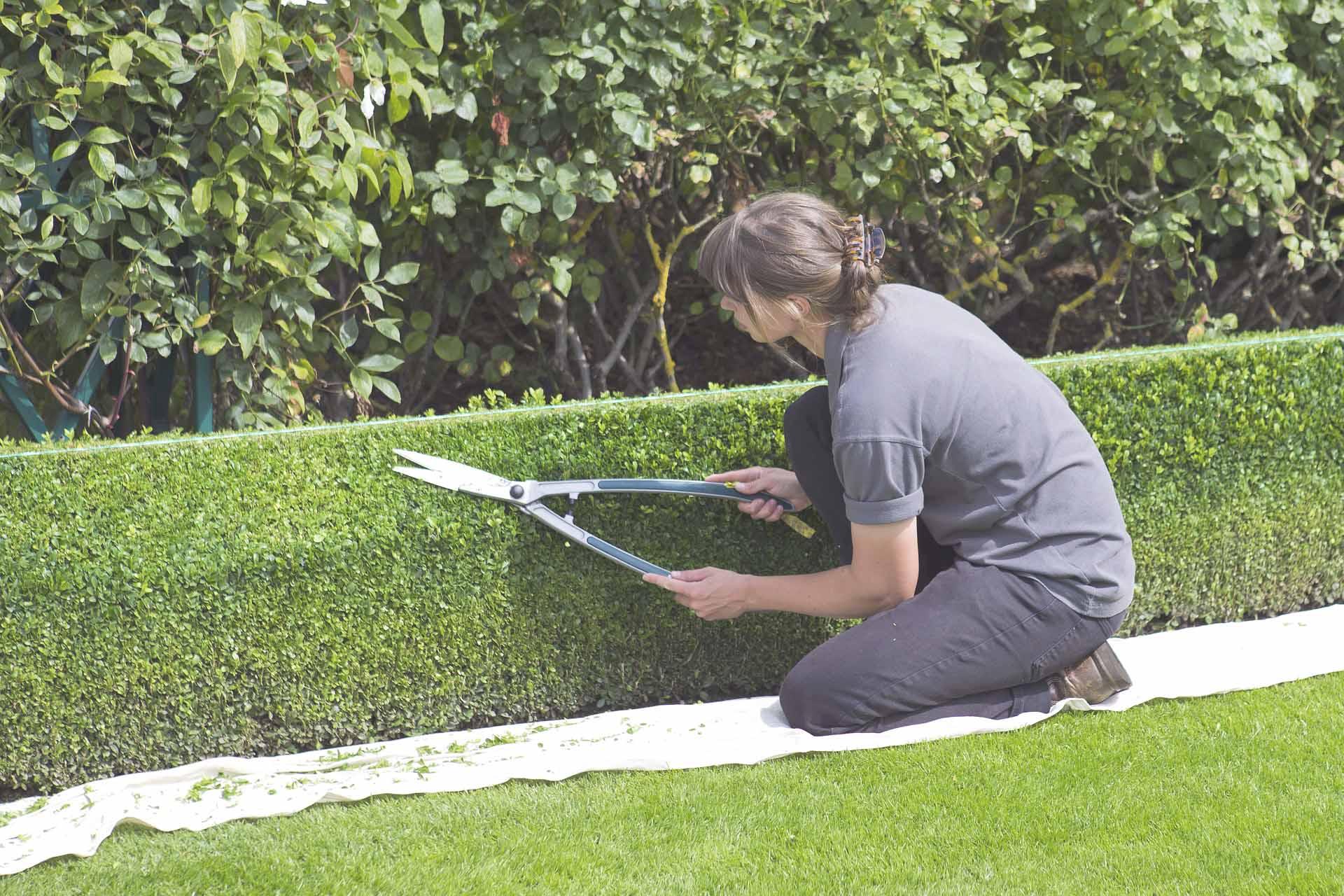 Conciergerie entretien jardin abattage d 39 arbres jura for Entretien jardin obligation